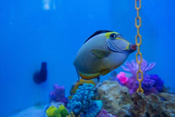 First Fish Move Into Donated 1,000 Gallon Exhibit Tank